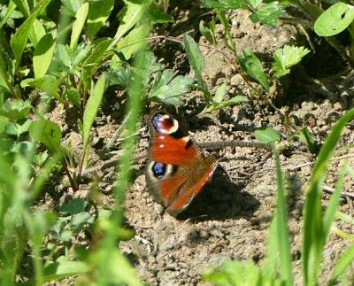 Mariposas nuevas y viejas