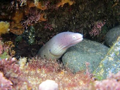 Recetas con anguila
