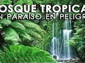 junio trópicos-