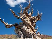 mostramos árbol antiguo mundo (porque nunca poder verlo personalmente)