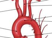 Examen angiologia