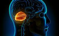 Las Diferencias estructurales del Cerebelo se relacionan con el Autismo