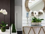Decorar elegantes orquídeas
