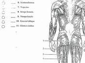 Elegant Best Anatomy Physiology Coloring Book