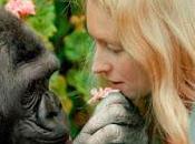 gorila koko dejado: ejemplo...un legado