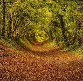 GALICIA, tala sus bosques en los márgenes de las carreteras.