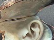 Cuando ostras necesitan orejas; Teoría práctica comunicación corporativa