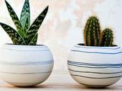 Dónde colocar cactus según Feng Shui