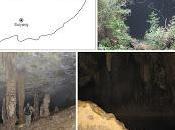 Origen hongos cuevas (Origin Cave Fungi)
