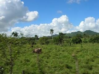 Viaje a Punta Cana, República Dominicana (III)