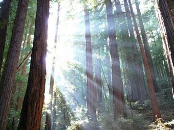 Trees_and_sunshine-Fuente Wikipedia