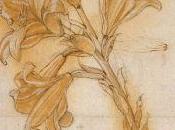 Leonardo Vinci también gustaba botánica
