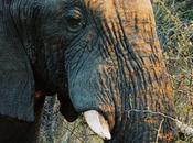 GoDaddy Criticado Video muestra Matando Elefante Dilema Ético?