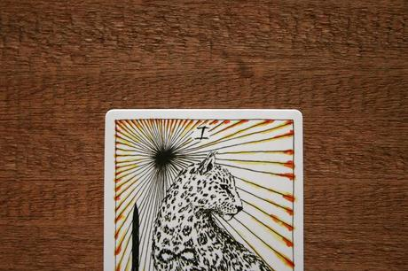 wild unknown tarot el mago