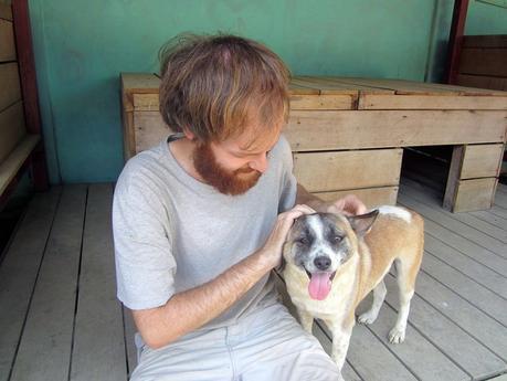 Voluntariado en Tailandia - Perros