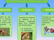 Funciones Animales