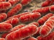 Eliminar infecciones antibióticos