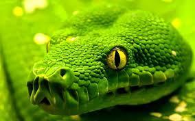 Soñar con serpientes,culebras o víboras..Conoce el significado real de sueños con serpientes.