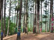 Escapada Bosque Oma. bosque encantado