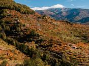 Valle Jerte, paisaje cultivado.