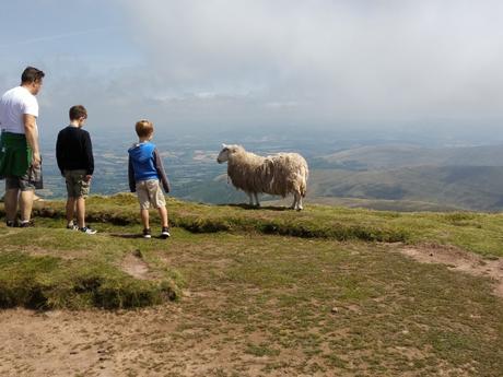 ... Y también ovejas
