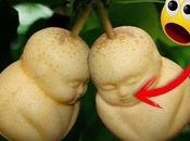 preguntado alguna cuál fruta cara mundo? Aquí está respuesta