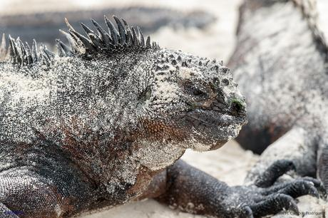 Ejemplar semi cubierto de arena en la playa