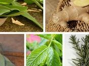 Plantas para disminuir triglicéridos