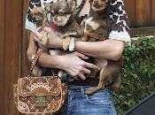 Paris Hilton chihuahuas