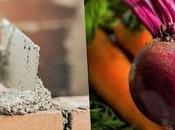 Cemento ecológico Remolachas Zanahorias