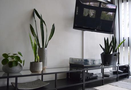 Dekorative Pflanzen Fürs Wohnzimmer Fotos Das Wirklich ...
