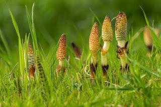 5 hierbas y plantas para bajar de peso