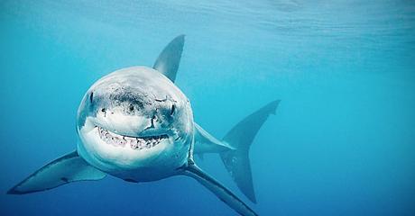Escualeno (aceite de tiburón) en Cosméticos y hasta en vacunas