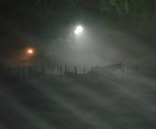 Niebla!!