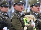 VIDEO: Revisa Parada Militar completa estas Fiestas Patrias 2018