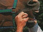 Refranes gustan: caballo regalado mira colmillo