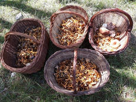 Nidos con setas variadas y jamón ibérico