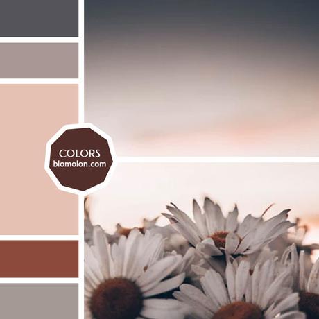 Variedad En Color 10 MoodBoard