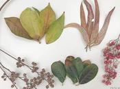 Manualidades para otoño hojas secas.