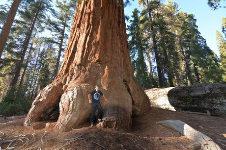 Sequoia National Park-Caminando por el Bosque Gigante
