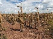 Según estudio dirigido Rutgers, ondas estacionarias subtropicales pudieran generar clima húmedo seco extremo nuestro planeta