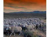 Preguntas formularios: pastoreo auto-pastoreo
