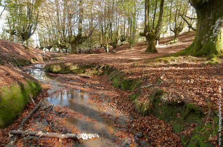 Hayedo de Otzarreta otoño planes naturaleza fotografia