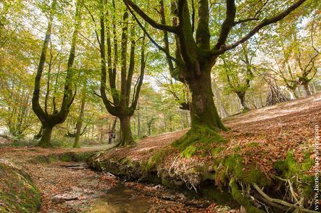 Hayedo de Otzarreta viaje otoño naturaleza paisaje