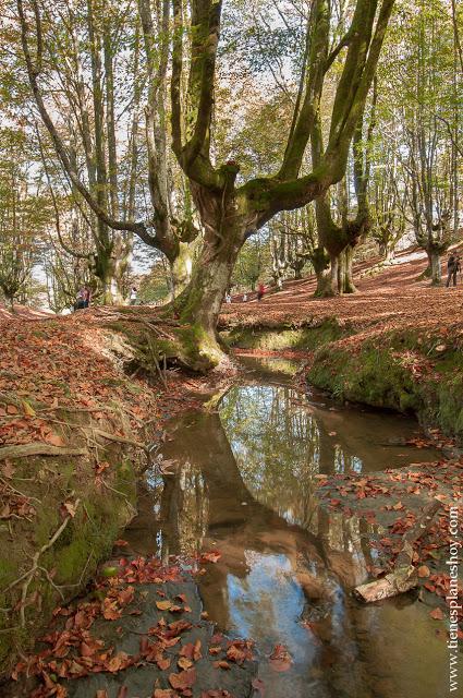 Hayedo de Otzarreta otoño paisaje bonito