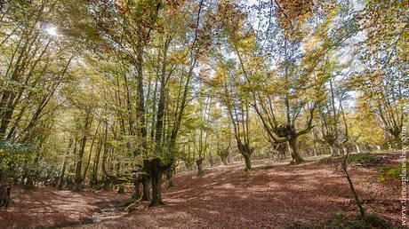 Hayedo de Otzarreta vizcaya pais vasco excursion