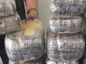 Policía incauta droga asia...