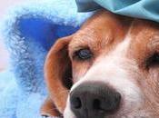 Enfermedades Potencialmente Mortales Prevenibles) Perros