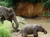turistas amaban elefantes Chiang