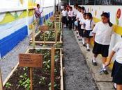 Cómo Cuidar Medio Ambiente Escuela